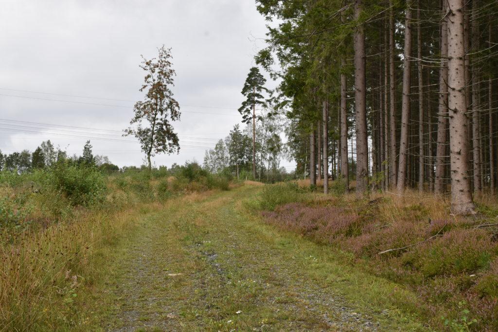 Vandringsvänlig skogsväg.