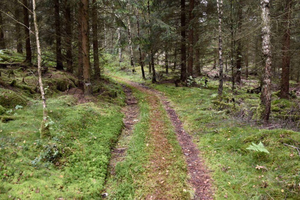 Hålvägen vittnar om en forntida väg på Viskastigen.